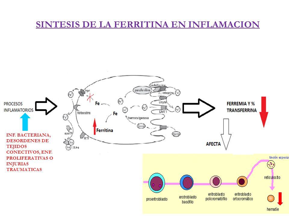 SINTESIS DE LA FERRITINA EN INFLAMACION INF. BACTERIANA, DESORDENES DE TEJIDOS CONECTIVOS, ENF. PROLIFERATIVAS O INJURIAS TRAUMATICAS
