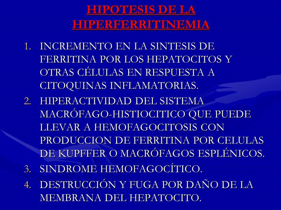 HIPOTESIS DE LA HIPERFERRITINEMIA 1.INCREMENTO EN LA SINTESIS DE FERRITINA POR LOS HEPATOCITOS Y OTRAS CÉLULAS EN RESPUESTA A CITOQUINAS INFLAMATORIAS