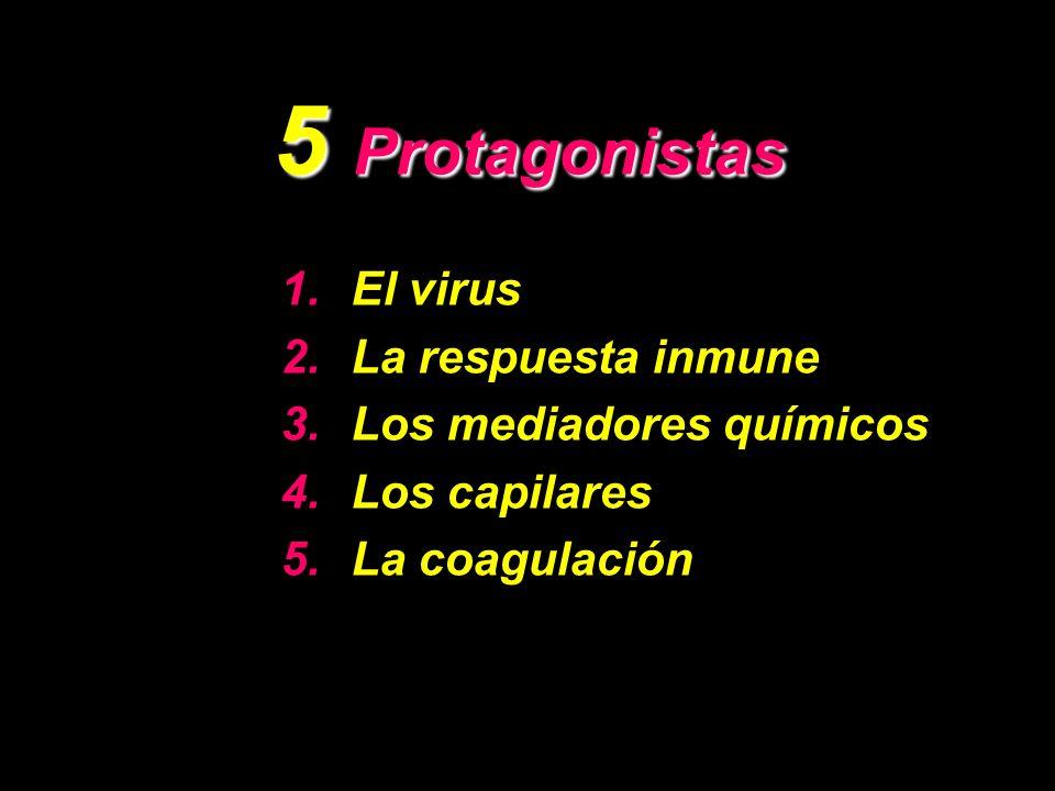 5 Protagonistas 1.El virus 2.La respuesta inmune 3.Los mediadores químicos 4.Los capilares 5.La coagulación