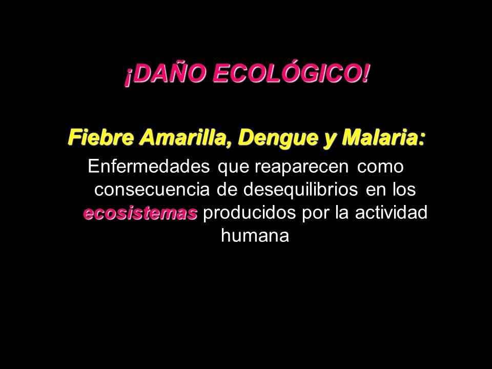 ¡DAÑO ECOLÓGICO! Fiebre Amarilla, Dengue y Malaria: ecosistemas Enfermedades que reaparecen como consecuencia de desequilibrios en los ecosistemas pro