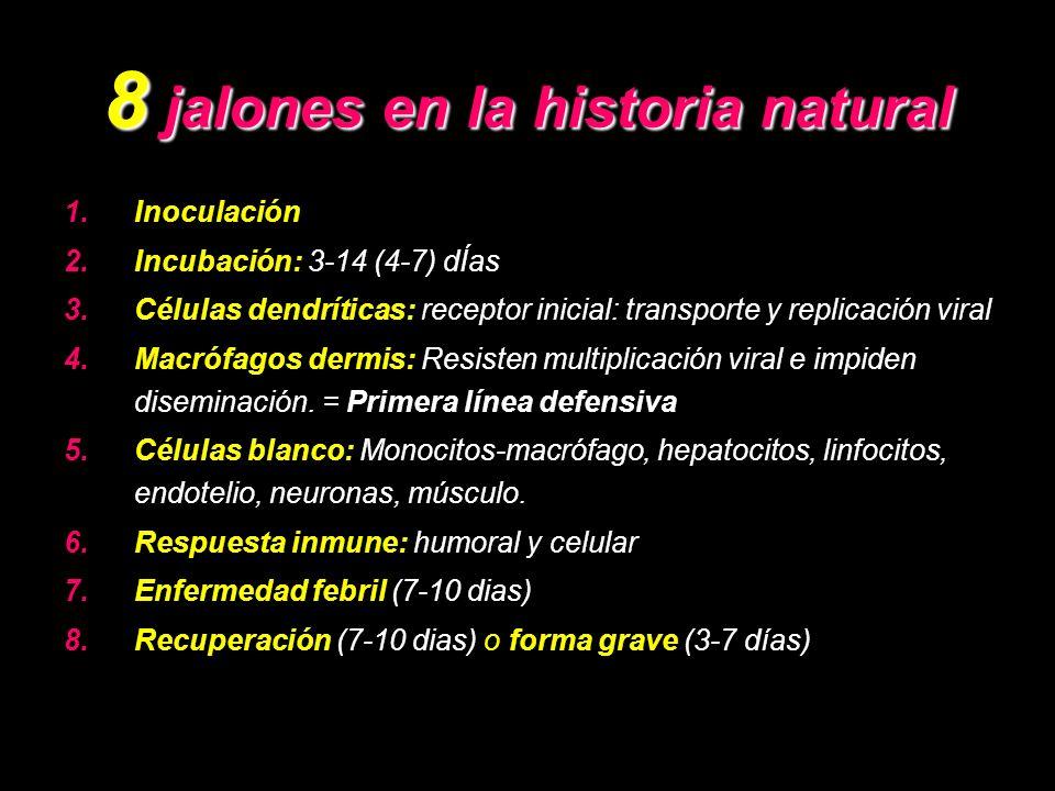 8 jalones en la historia natural 1.Inoculación 2.Incubación: 3-14 (4-7) dÍas 3.Células dendríticas: receptor inicial: transporte y replicación viral 4.Macrófagos dermis: Resisten multiplicación viral e impiden diseminación.