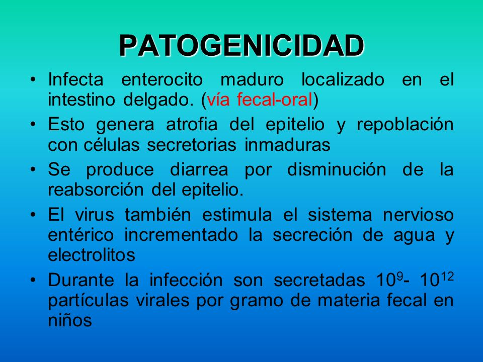 PATOGENICIDAD Infecta enterocito maduro localizado en el intestino delgado. (vía fecal-oral) Esto genera atrofia del epitelio y repoblación con célula