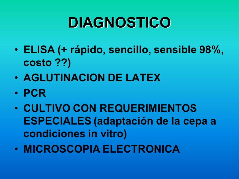 DIAGNOSTICO ELISA (+ rápido, sencillo, sensible 98%, costo ??) AGLUTINACION DE LATEX PCR CULTIVO CON REQUERIMIENTOS ESPECIALES (adaptación de la cepa