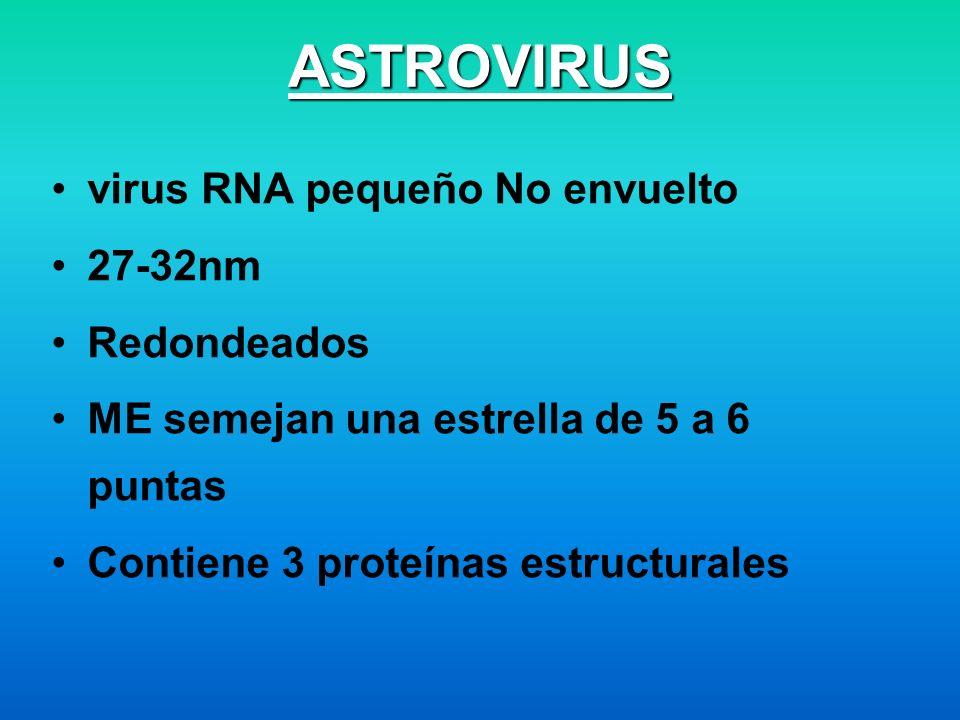 ASTROVIRUS virus RNA pequeño No envuelto 27-32nm Redondeados ME semejan una estrella de 5 a 6 puntas Contiene 3 proteínas estructurales