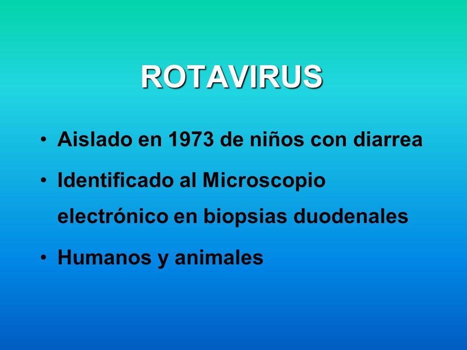 ROTAVIRUS Aislado en 1973 de niños con diarrea Identificado al Microscopio electrónico en biopsias duodenales Humanos y animales