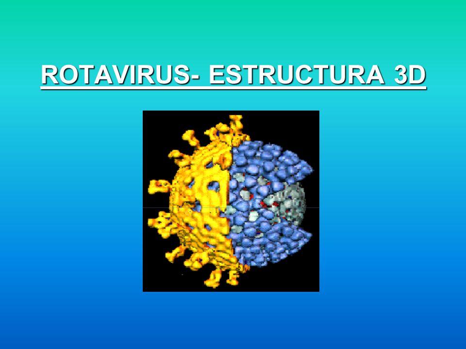 ROTAVIRUS- ESTRUCTURA 3D