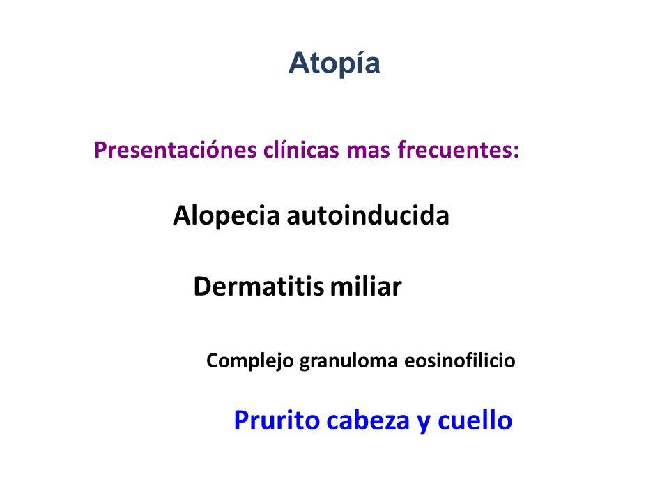 Atopía Alopecia autoinducida Dermatitis miliar Complejo granuloma eosinofilicio Prurito cabeza y cuello Presentaciónes clínicas mas frecuentes: