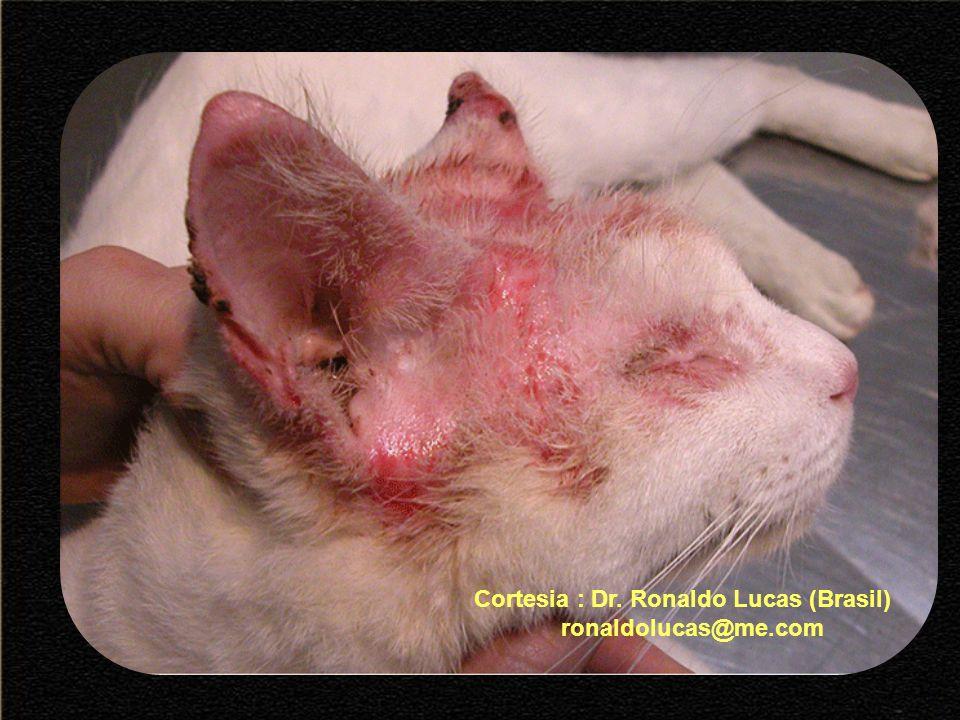 Cortesia : Dr. Ronaldo Lucas (Brasil) ronaldolucas@me.com
