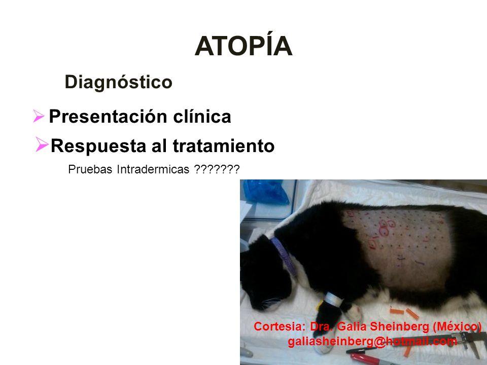 ATOPÍA Diagnóstico Presentación clínica Respuesta al tratamiento Pruebas Intradermicas ??????? Cortesia: Dra. Galia Sheinberg (México) galiasheinberg@