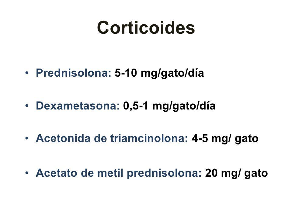 Corticoides Prednisolona: 5-10 mg/gato/día Dexametasona: 0,5-1 mg/gato/día Acetonida de triamcinolona: 4-5 mg/ gato Acetato de metil prednisolona: 20