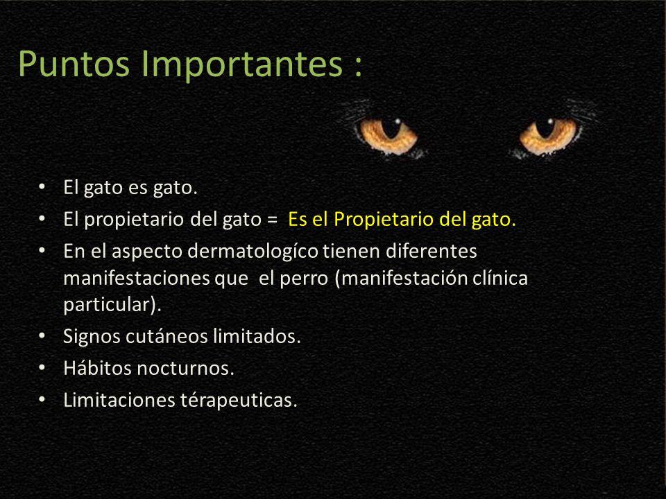 Puntos Importantes : El gato es gato. El propietario del gato = Es el Propietario del gato. En el aspecto dermatologíco tienen diferentes manifestacio