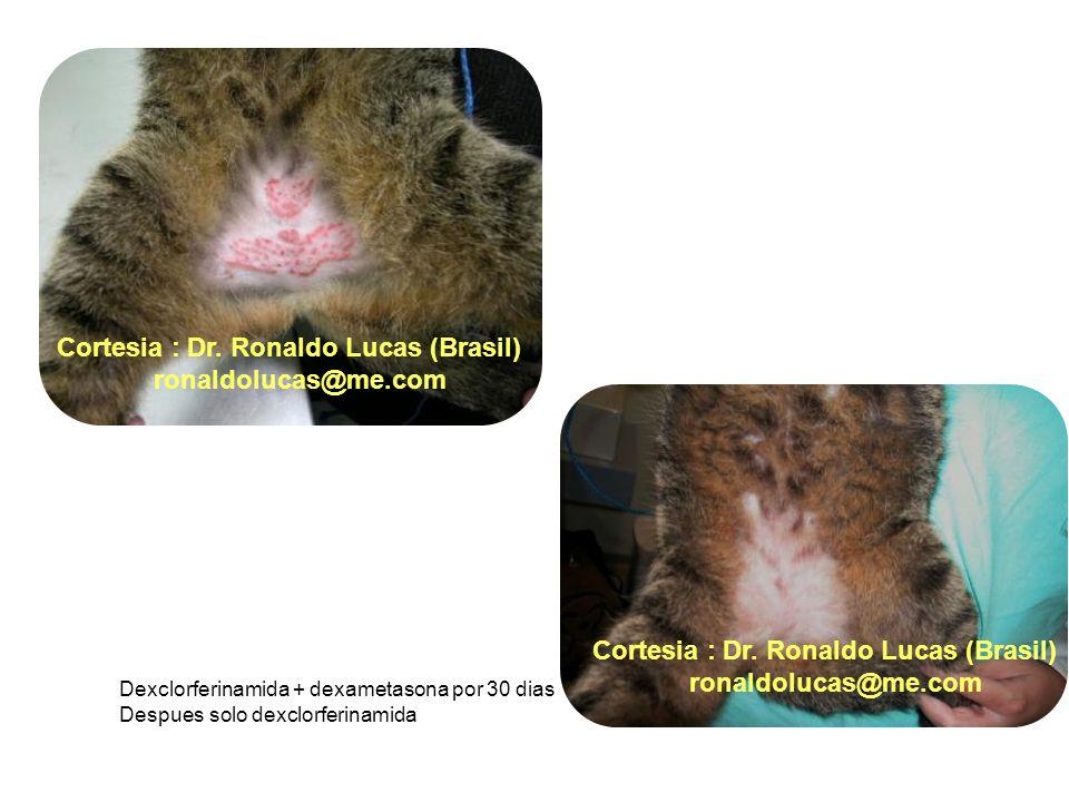 Dexclorferinamida + dexametasona por 30 dias Despues solo dexclorferinamida Cortesia : Dr. Ronaldo Lucas (Brasil) ronaldolucas@me.com Cortesia : Dr. R