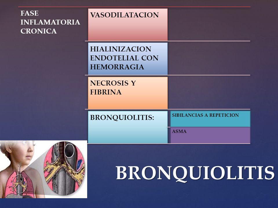 FASE INFLAMATORIA CRONICA VASODILATACION HIALINIZACION ENDOTELIAL CON HEMORRAGIA NECROSIS Y FIBRINA BRONQUIOLITIS: SIBILANCIAS A REPETICION ASMABRONQU