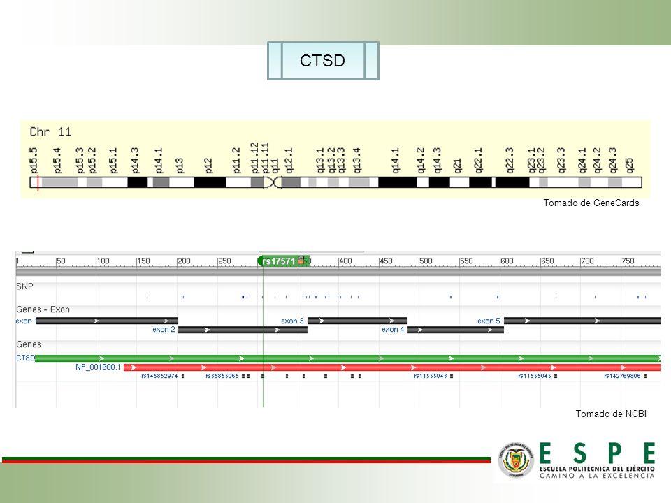 CTSD Tomado de GeneCards Tomado de NCBI