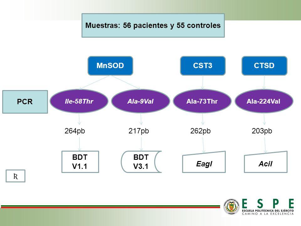 Ala-9ValIle-58ThrAla-73ThrAla-224Val AciIEagI BDT V3.1 264pb217pb262pb203pb Muestras: 56 pacientes y 55 controles MnSODCST3CTSD PCR BDT V1.1 Ʀ
