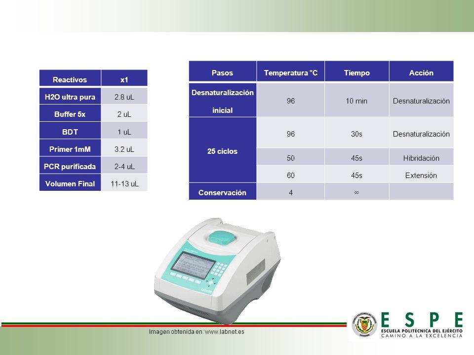Reactivosx1 H2O ultra pura2.8 uL Buffer 5x2 uL BDT1 uL Primer 1mM3.2 uL PCR purificada2-4 uL Volumen Final11-13 uL PasosTemperatura °CTiempoAcción Des
