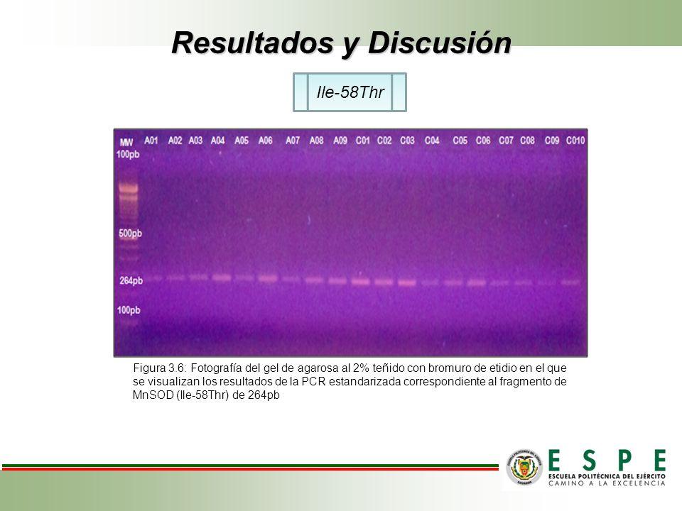 Resultados y Discusión Ile-58Thr Figura 3.6: Fotografía del gel de agarosa al 2% teñido con bromuro de etidio en el que se visualizan los resultados d
