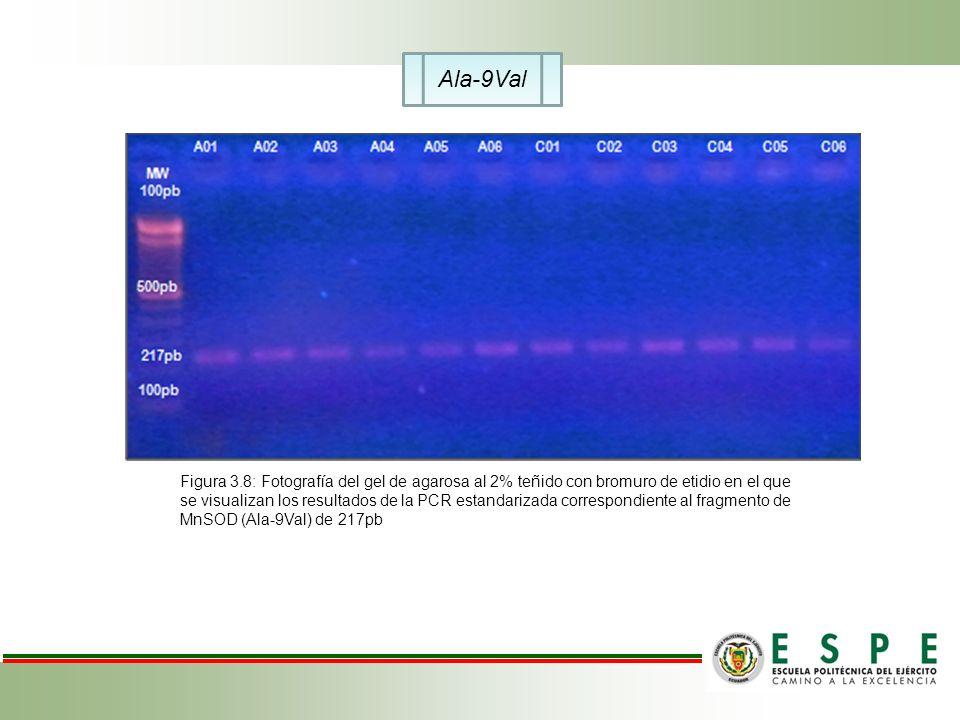 Ala-9Val Figura 3.8: Fotografía del gel de agarosa al 2% teñido con bromuro de etidio en el que se visualizan los resultados de la PCR estandarizada c