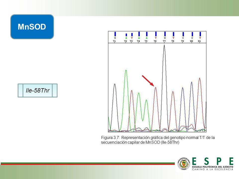Ile-58Thr MnSOD Figura 3.7: Representación gráfica del genotipo normal T/T de la secuenciación capilar de MnSOD (Ile-58Thr)