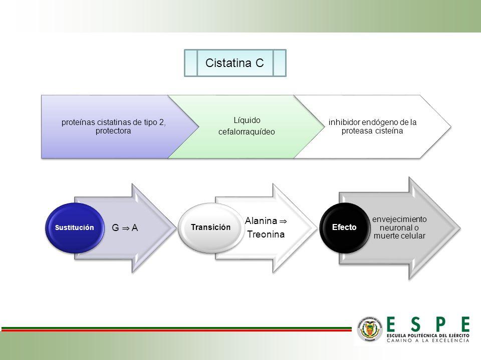 G A Sustitución Alanina Treonina Transición envejecimiento neuronal o muerte celular Efecto Cistatina C proteínas cistatinas de tipo 2, protectora Líq