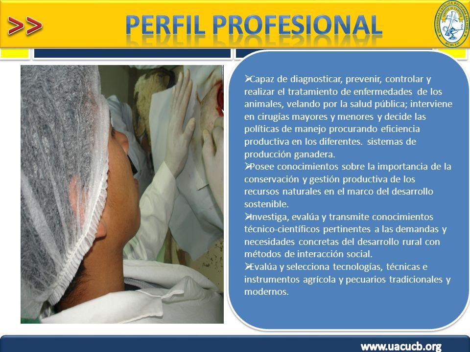 Capaz de diagnosticar, prevenir, controlar y realizar el tratamiento de enfermedades de los animales, velando por la salud pública; interviene en ciru