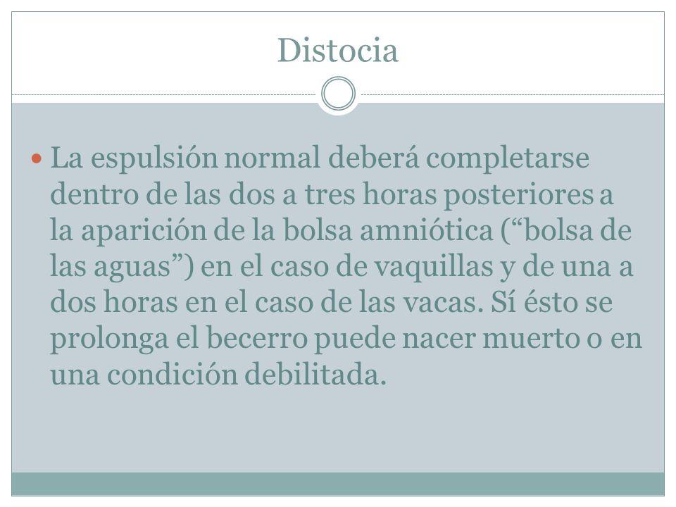 Distocia La espulsión normal deberá completarse dentro de las dos a tres horas posteriores a la aparición de la bolsa amniótica (bolsa de las aguas) e