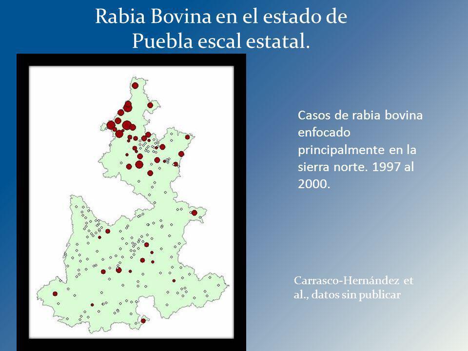 Casos de rabia bovina enfocado principalmente en la sierra norte. 1997 al 2000. Rabia Bovina en el estado de Puebla escal estatal. Carrasco-Hernández
