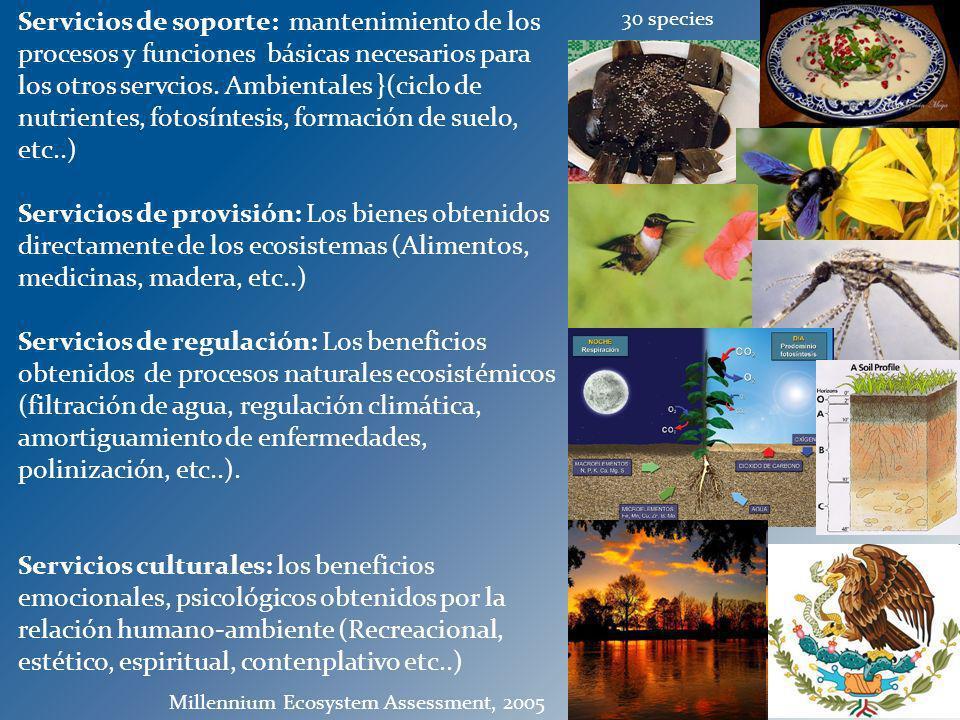 Servicios de soporte: mantenimiento de los procesos y funciones básicas necesarios para los otros servcios. Ambientales }(ciclo de nutrientes, fotosín