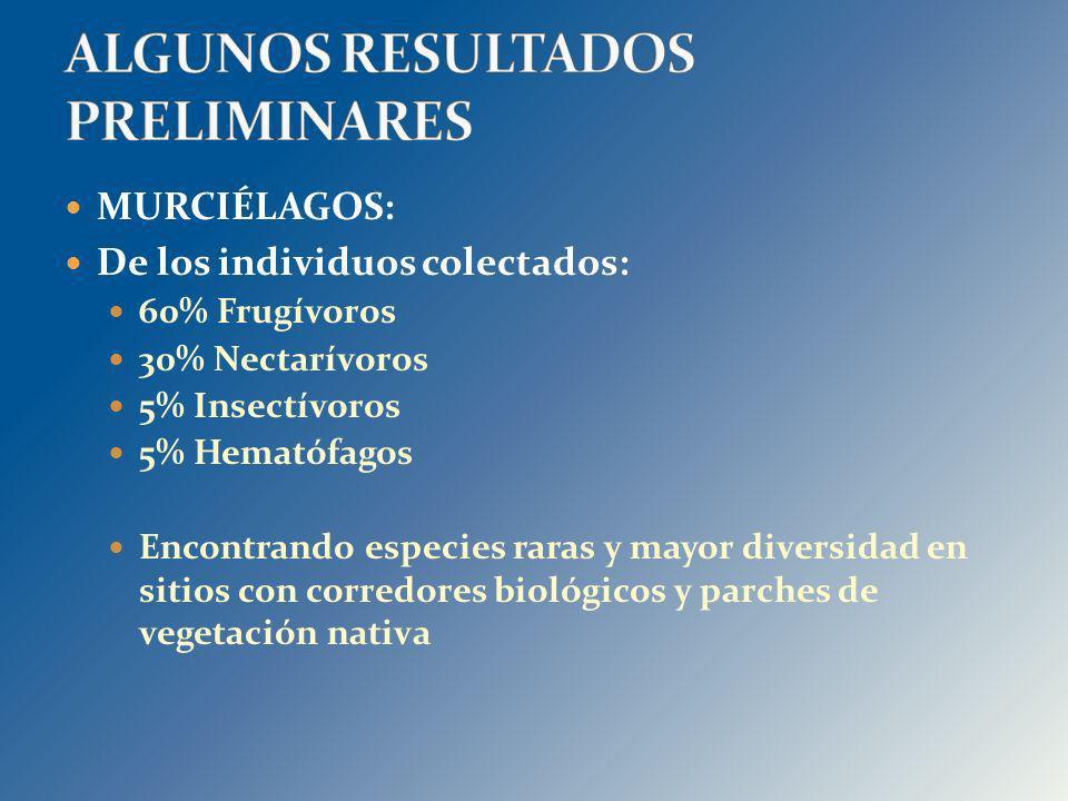 MURCIÉLAGOS: De los individuos colectados: 60% Frugívoros 30% Nectarívoros 5% Insectívoros 5% Hematófagos Encontrando especies raras y mayor diversida