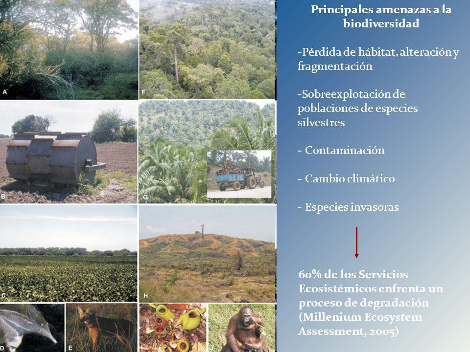 Principales amenazas a la biodiversidad -Pérdida de hábitat, alteración y fragmentación -Sobreexplotación de poblaciones de especies silvestres - Cont
