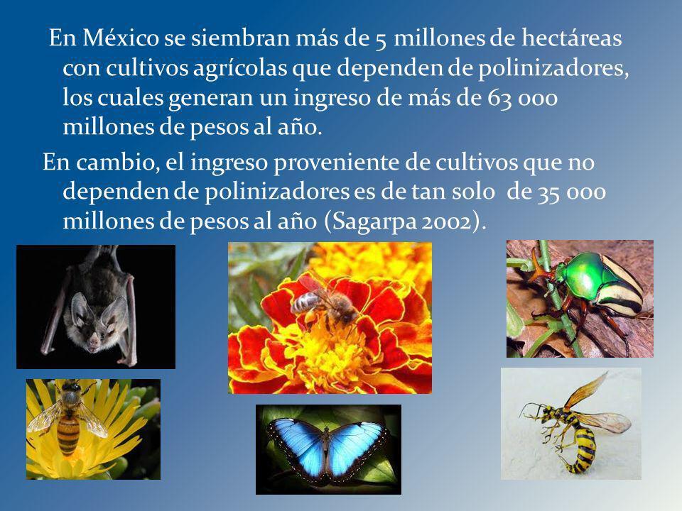 En México se siembran más de 5 millones de hectáreas con cultivos agrícolas que dependen de polinizadores, los cuales generan un ingreso de más de 63