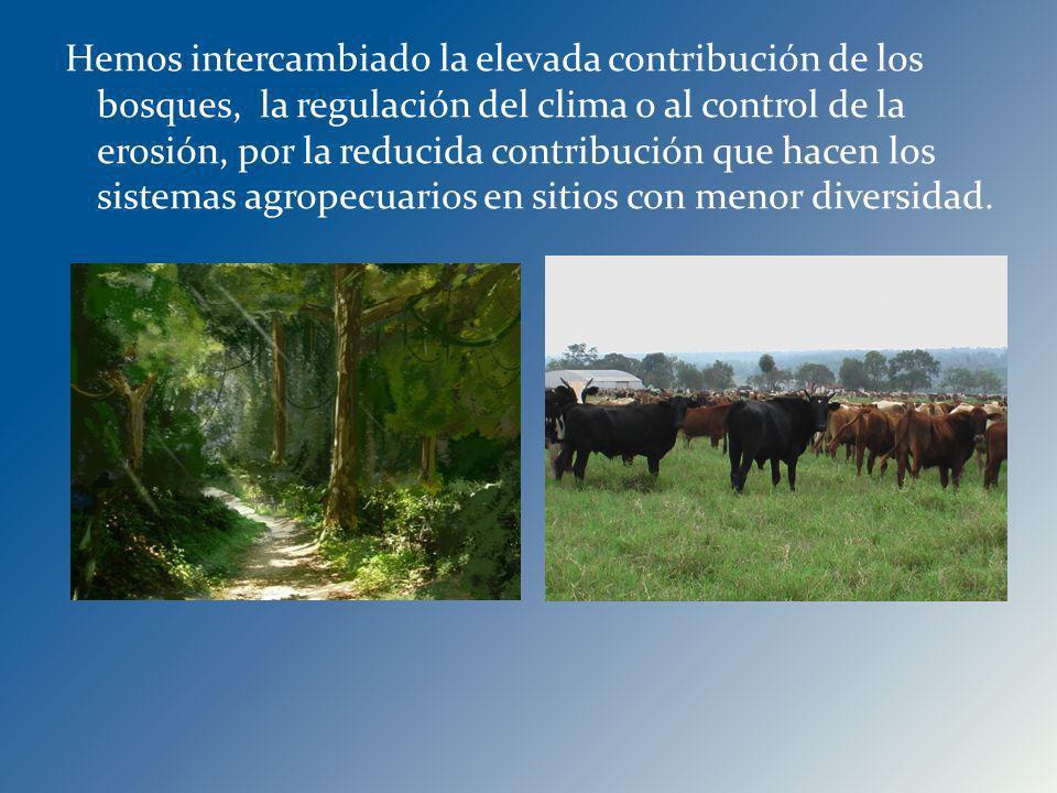 Hemos intercambiado la elevada contribución de los bosques, la regulación del clima o al control de la erosión, por la reducida contribución que hacen