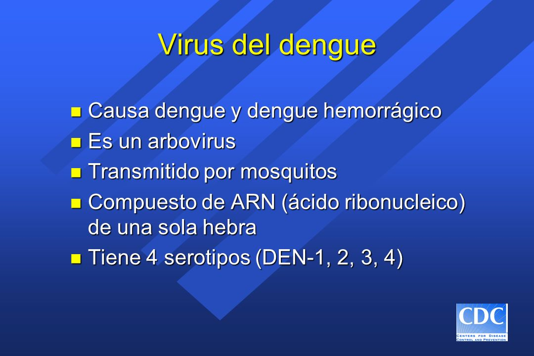 Factores de riesgo propuestos para el dengue hemorrágico n Cepa del virus n Anticuerpo anti-dengue preexistente infección previa infección previa anticuerpos maternos en los menores de un año anticuerpos maternos en los menores de un año n Genética del huésped n Edad