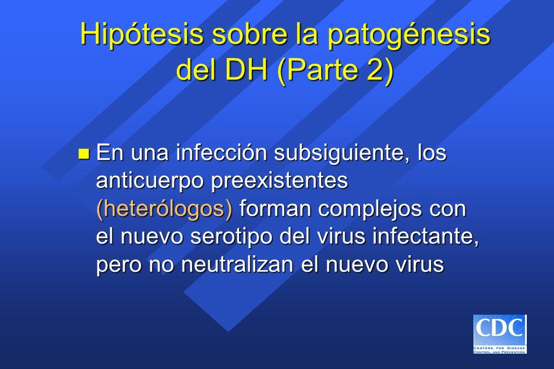 Hipótesis sobre la patogénesis del DH (Parte 2) n En una infección subsiguiente, los anticuerpo preexistentes (heterólogos) forman complejos con el nu