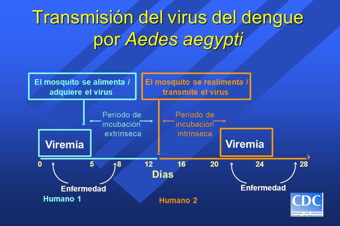 Métodos de laboratorio para el diagnóstico del dengue, Sección del Dengue del CDC n Aislamiento del virus para determinar el serotipo del virus infectante n Prueba IgM ELISA para el diagnóstico serológico