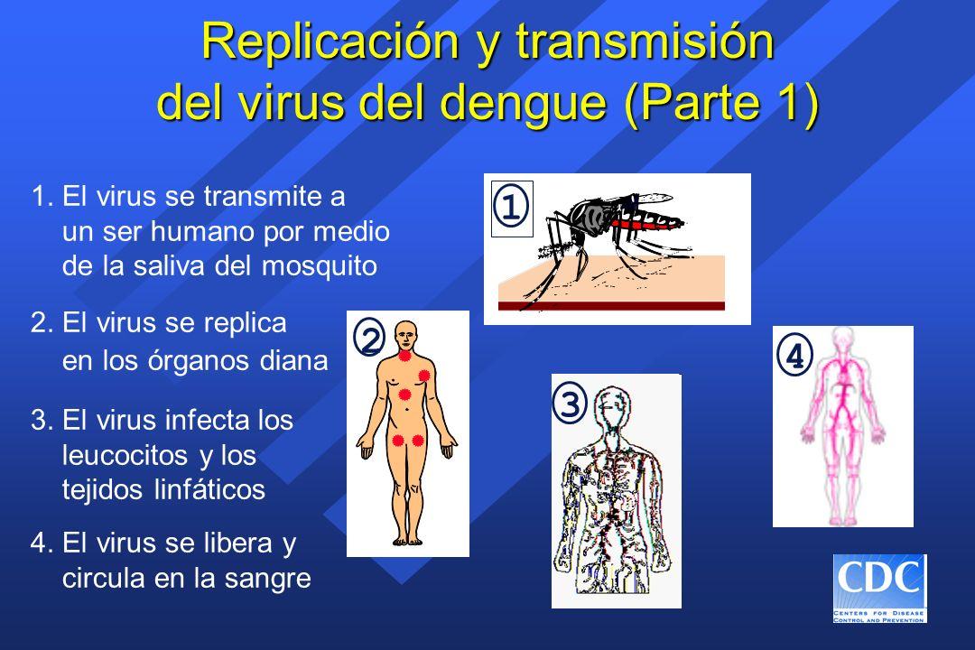Señales de alerta para el choque del dengue Cuándo los pacientes desarrollan SCD: 3 a 6 días después de la aparición de los síntomas Cuándo los pacientes desarrollan SCD: 3 a 6 días después de la aparición de los síntomas Señales iniciales de alerta: Desaparición de la fiebre Disminución del número de plaquetas Aumento de hematócrito Señales iniciales de alerta: Desaparición de la fiebre Disminución del número de plaquetas Aumento de hematócrito Cuatro criterios para el DH: Fiebre Manifestaciones hemorrágicas Excesiva permeabilidad capilar 100.000/mm 3 plaquetas Cuatro criterios para el DH: Fiebre Manifestaciones hemorrágicas Excesiva permeabilidad capilar 100.000/mm 3 plaquetas Señales de alarma: Dolor abdominal intenso y mantenido Vómitos persistentes Cambio abrupto de fiebre a hipotermia Cambio en el nivel de conciencia (agitación o somnolencia) Señales de alarma: Dolor abdominal intenso y mantenido Vómitos persistentes Cambio abrupto de fiebre a hipotermia Cambio en el nivel de conciencia (agitación o somnolencia)