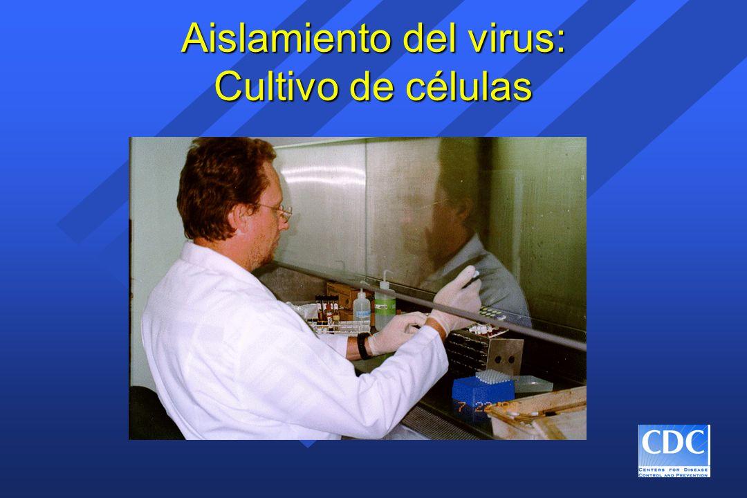Aislamiento del virus: Cultivo de células