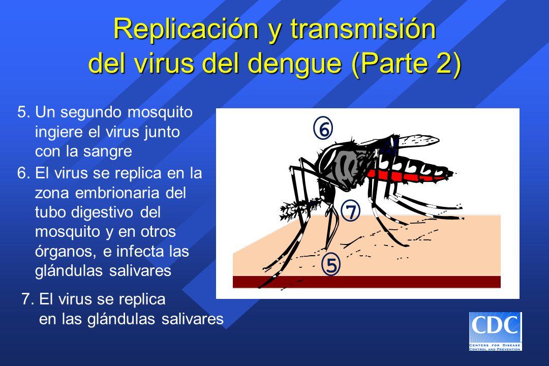 ¿Una vacuna contra el dengue.
