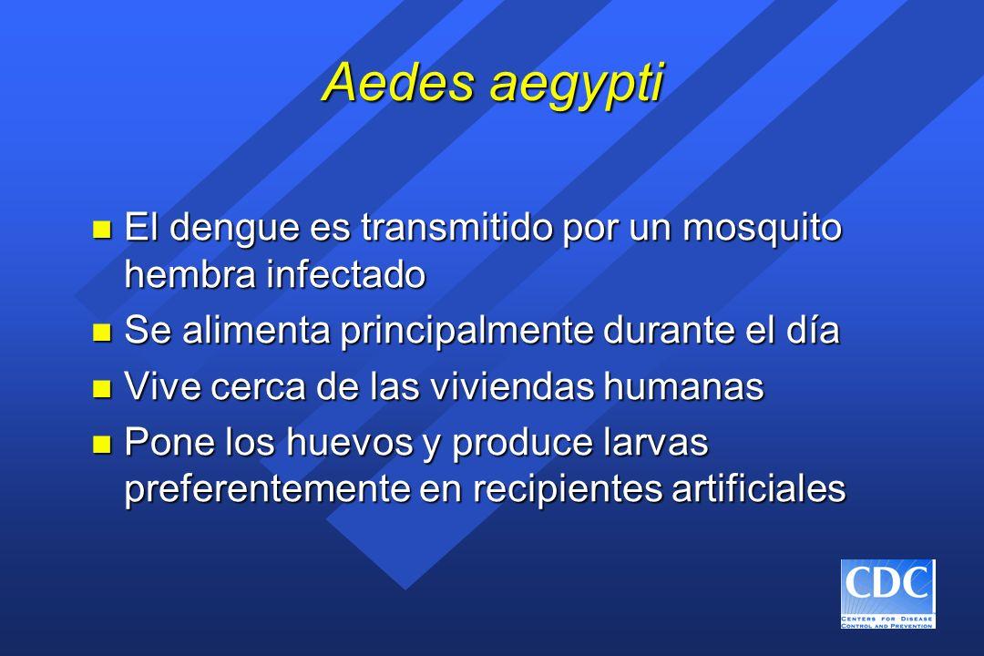 Aedes aegypti n El dengue es transmitido por un mosquito hembra infectado n Se alimenta principalmente durante el día n Vive cerca de las viviendas hu