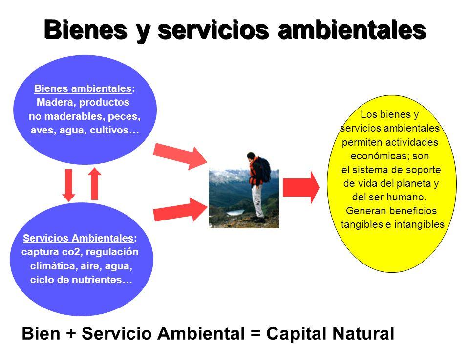 Principales Experiencias en el Mundo La valorización económica del capital natural ha puesto al PSA en la agenda internacional.