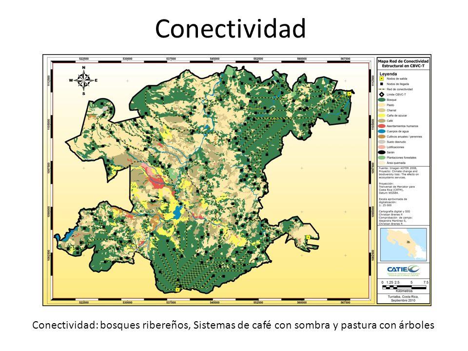 Conectividad Conectividad: bosques ribereños, Sistemas de café con sombra y pastura con árboles