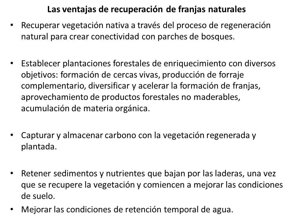 Las ventajas de recuperación de franjas naturales Recuperar vegetación nativa a través del proceso de regeneración natural para crear conectividad con