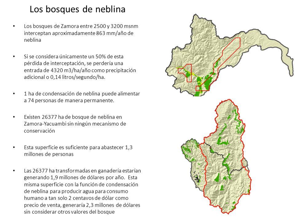 Los bosques de neblina Los bosques de Zamora entre 2500 y 3200 msnm interceptan aproximadamente 863 mm/año de neblina Si se considera únicamente un 50