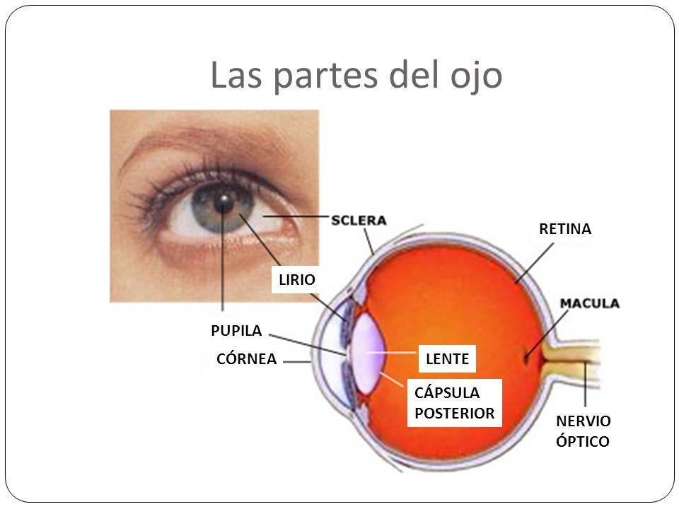En caso de emergencia: Químicos en el ojo Enjuague el ojo con agua limpio por 15 minutos.