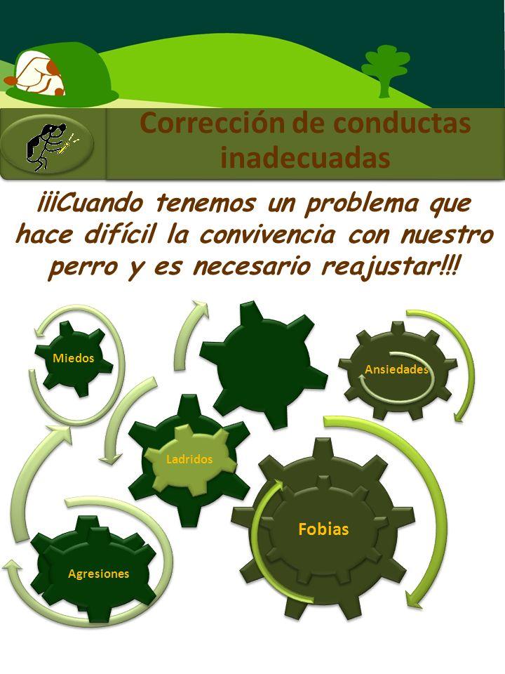 Corrección de conductas inadecuadas ¡¡¡Cuando tenemos un problema que hace difícil la convivencia con nuestro perro y es necesario reajustar!!.