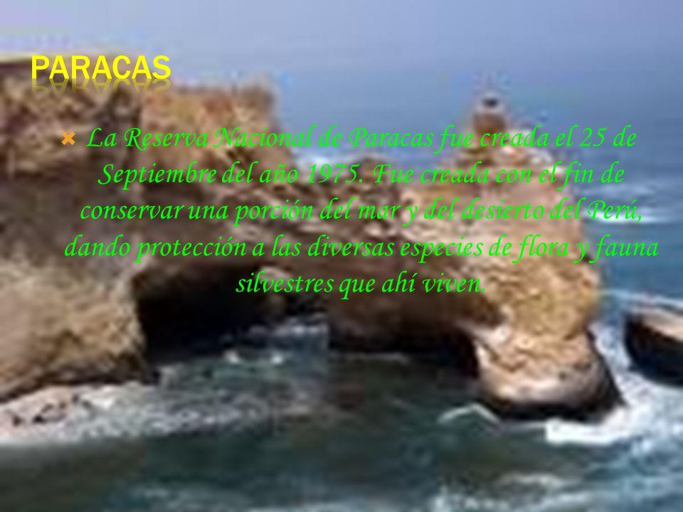 La Reserva Nacional de Pampa Galeras fue creada en 1967 y es una famosa zona de recuperación de la vicuña. Ubicada en la provincia de Lucanas, región