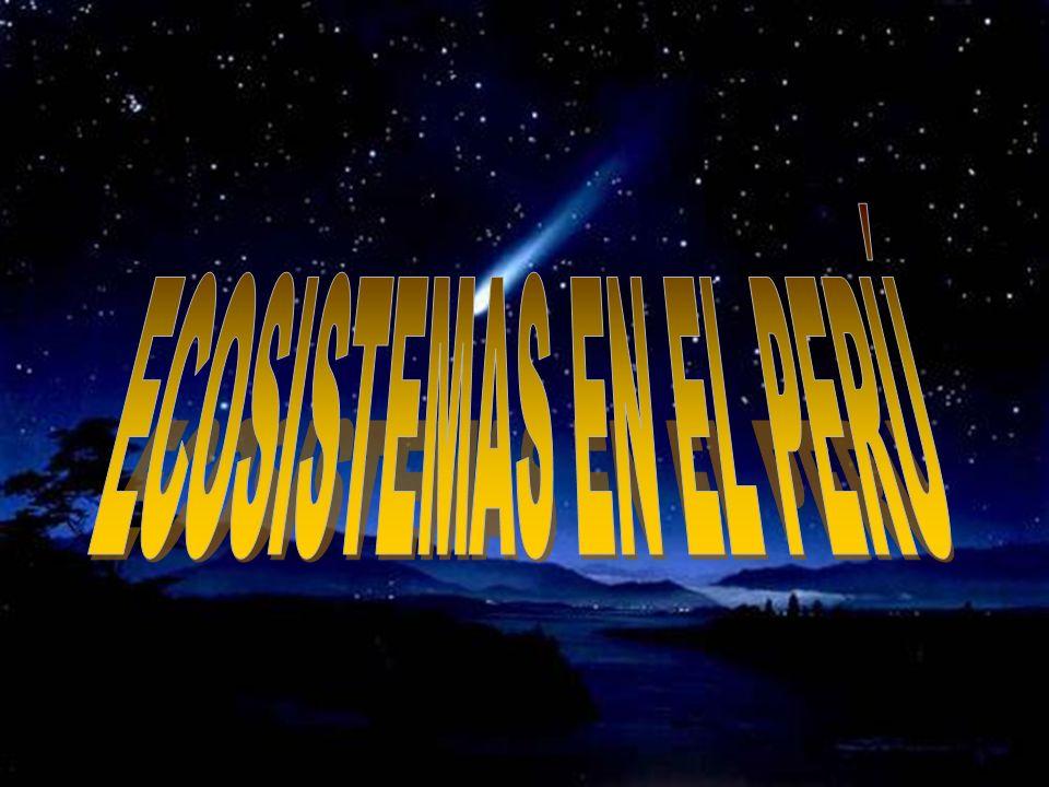 HEYDY WENDY ARTEAGA SALAZAR MIRELLIA CHRIS BUSTINZA LIMA CANDIDA BRIYITH CHIQUE VELASQUEZ YESSENIA NOEMI COAQUIRA FLORES MERCEDES LARICO CHOQUE ESMERA