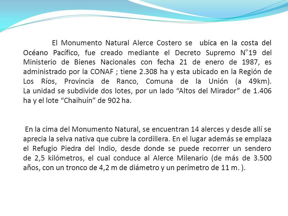 PUDÚ: un cérvido endémico de los bosques de Chile y Argentina, conocidos comúnmente como pudúes.