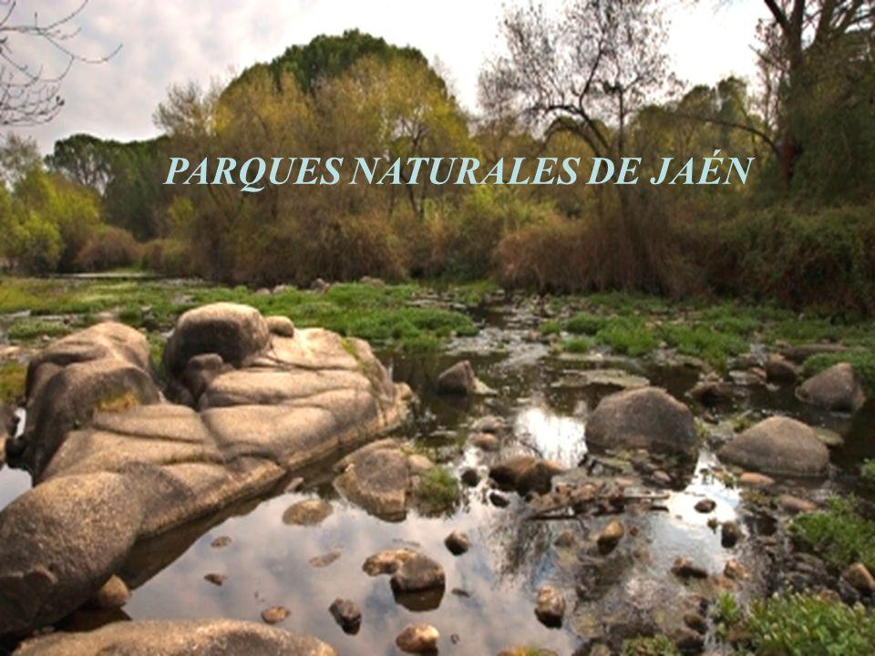 PARQUES NATURALES DE JAÉN