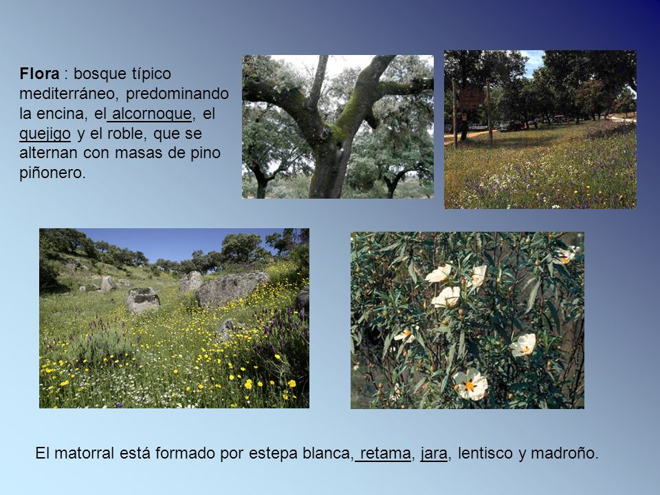 Flora : bosque típico mediterráneo, predominando la encina, el alcornoque, el quejigo y el roble, que se alternan con masas de pino piñonero. El mator